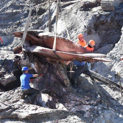 opgraving potvis Valentijn van Sint André