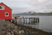 IJslandreis - © Willy Wouters