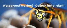 E-loket wespennest